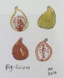 A miniature drawing of figs by islander Manda Holden.