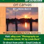 linda_buck_web_16 (1)