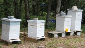 Styrons and Deans bee hives.