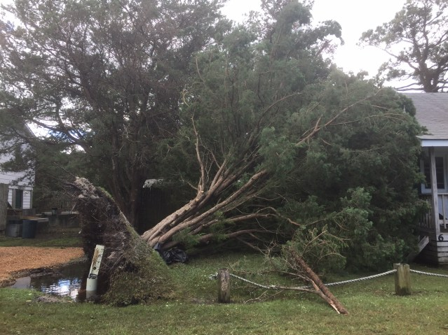 A tree at Edwards of Ocracoke motel is a casualty of Hurricane Matthew. Hyde County officials asked residents to move tree debris to the side of the roads so that a debris contractor coming on the island can assess damage. Photo: C. Leinbach