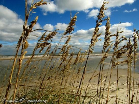 Shoreline, by Crystal Canterbury, Ocracoke, NC