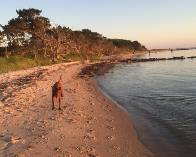 Springer's Point beach, Ocracoke, NC. Photo: C. Leinbach