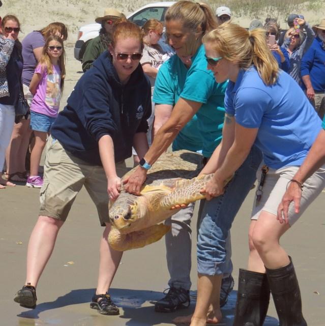 Sea turtle release April 25 on Ocracoke Island, N.C.
