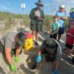 Turtle excavation 7-17-17