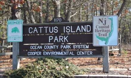 Cattus Island: Fire Alarm Activation