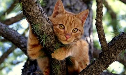 Barnegat: 0 Block of Ravenwood- Cat High in a Tree!