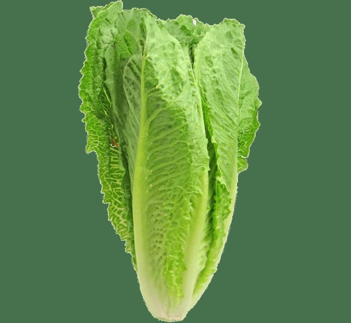 CDC: Romaine Lettuce Linked To E Coli Outbreak