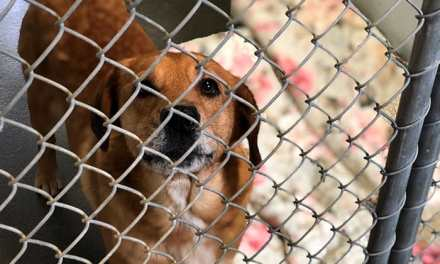 """OCEAN COUNTY: Local Rescue Organizations Making """"Shelter Animals Count"""""""