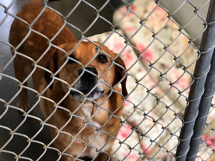 "OCEAN COUNTY: Local Rescue Organizations Making ""Shelter Animals Count"""