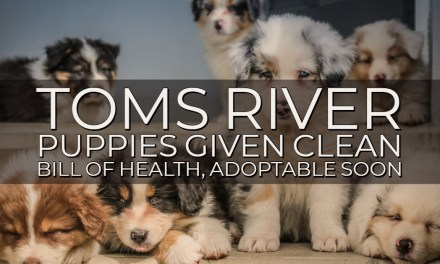 TOMS RIVER: Quarantined Puppies Adoptable Soon!