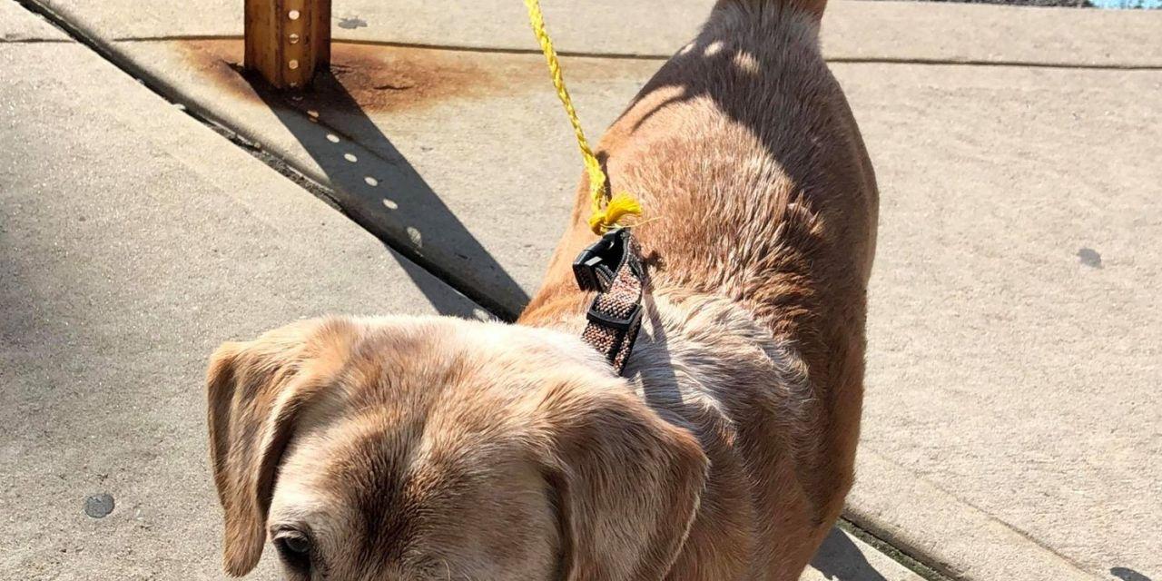 SSH: Hungry Dog Seeks Kibble