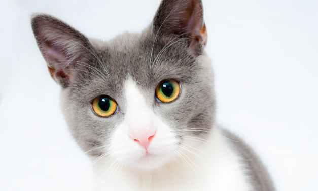 SSP: Stray Cats