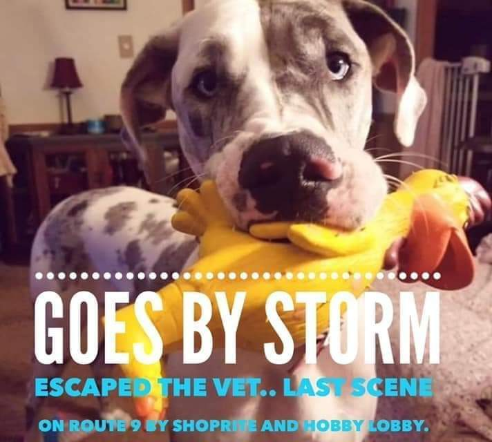 Purrferred Vet in Howell loses dog – search is on for Storm – PLEASE HELP!!