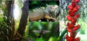 colalge biodivers