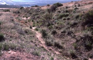 deep ruts in sagebrush landscape