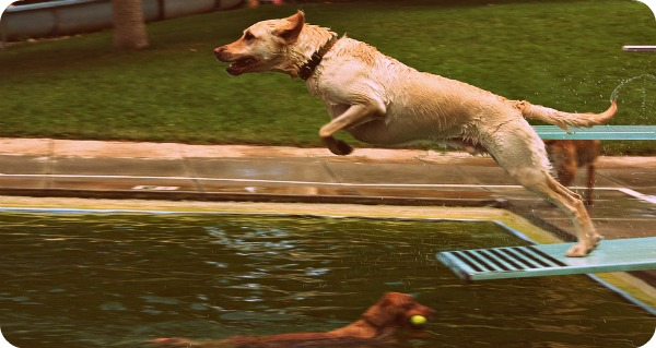 Dog Dare Swimming