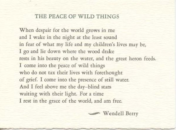 Peace of the Wild Things