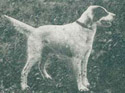 Florendale Lou's Beau- An influential field trial dog behind many Rymans.