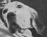 Am/Eng Ch Mallwyd Edward- An influential show dog behind early Rymans.