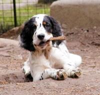 Heath as Puppy