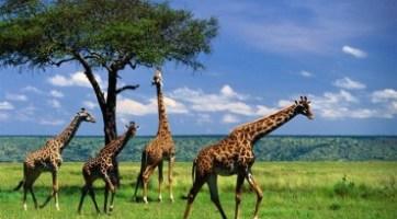 南非尋奇驚艷之旅九天