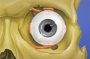 Orbital Eye Socket, Eye Socket Surgery, Orbit Eye Socket ...