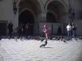 Dziewczynka i gołębie
