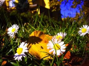 Jesień, czy wiosna?