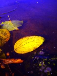 Jesień na wodzie