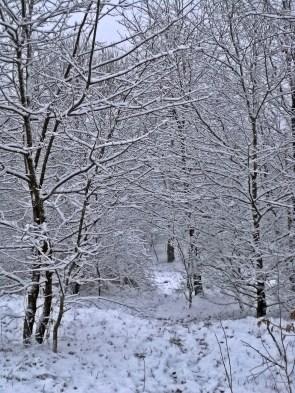 Śnieg (1)