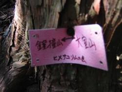 木の幹に挟み込むようにして、こんなものが