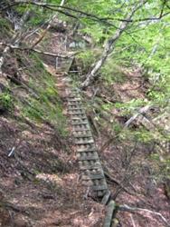 木の橋を渡り