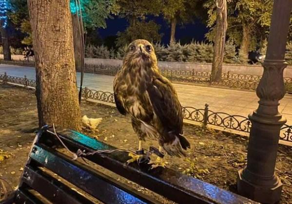 Одесский зоопарк снял видео про уличного фотографа ...