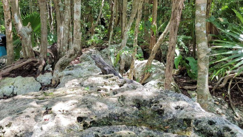 עצים על סלעים בטבע