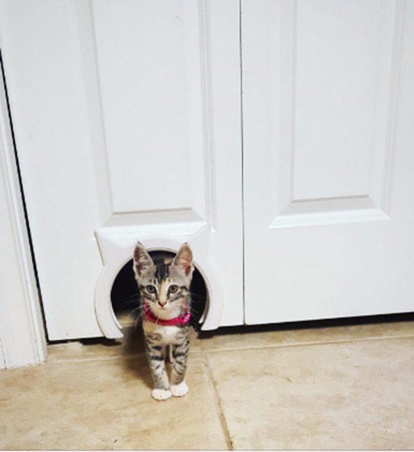 How Not To Install A Cat Door You