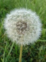 Blowing Flower