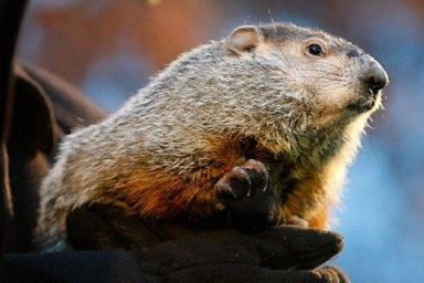 Groundhog-Day-