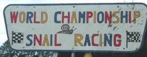 Snail Championship