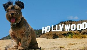 hollywood_dog