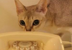 cat 911