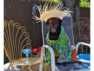 Dress-up-your-pet day