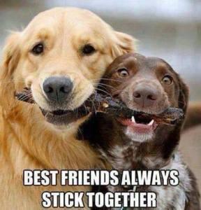 Best Friends Stick together