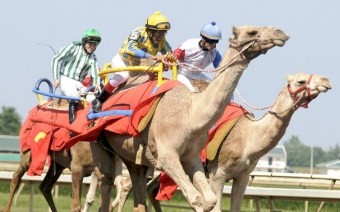 CamelRaces3_t607