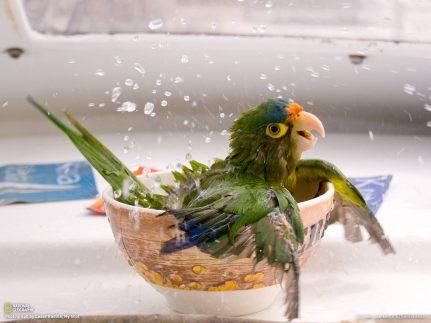 Amnesty International, Hamburger Day, Brisket Day Parrot bath