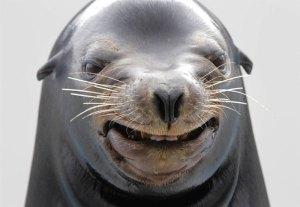 Happy-Animal