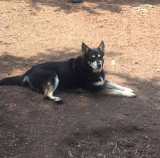 Camp Run A Pup