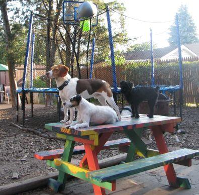 Hodge Podge paint picnic table