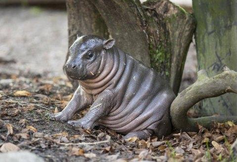 Photograph by Parken Zoo, Chocolate Cupcake Day, No Beard Day