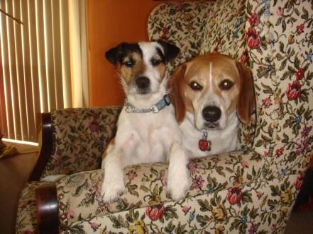 Joey the Beagle and Rascal