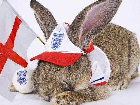 Rabbit Rabbit- Darius